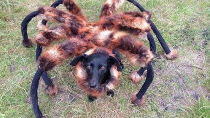Spider dog, Warsaw (photo found everywhere on the internet)